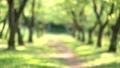 树木 32367555