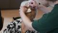 介護イメージ 介護 シニア 高齢者 女性 90代 デイケア デイサービス 介助 介護士 食事 32513262