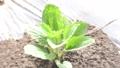 苗 アスt- 花 花壇 菜園 植物 葉 緑 環境 エコ 32513349