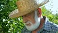 farmer, senior, elderly 32541484