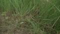 สนามหญ้า,หญ้า,การตัด 32581164