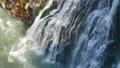 滝 瀑布 白ひげの滝の動画 32623278