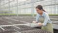 Young woman weeding green salad seedlings in 32682530