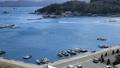 宇和海の養殖筏と漁船(愛媛県宇和島市遊子水荷浦) 32683138