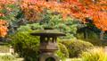 秋の東京 紅葉 庭園 スライダー撮影 32746289