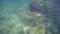 乌龟 海龟 水下 32825642