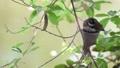 鸟儿 鸟 栖息 32859018