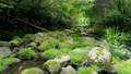 渓流 清流 川の動画 32900914