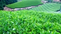 A tea plantation in the mountains 32986545