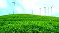 Mountain tea field 32986546