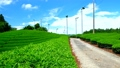 Mountain tea field 32986547