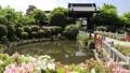 5月 ツツジの妙満寺 -春の京都- 33089741