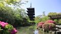 5月 ツツジの東寺 -京都の世界遺産- 33089743