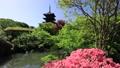 5月 ツツジの東寺 -京都の世界遺産- 33089744