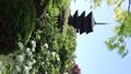 5月 ツツジの東寺 -京都の世界遺産- 33089745