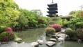 5月 ツツジの東寺 -京都の世界遺産- 33089746