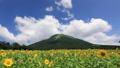 伯耆大山とひまわり畑〜ズームアップ 33108655