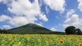 伯耆大山とひまわり畑〜タイムラプス 33108659