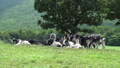pasture, cow, cattle 33108676