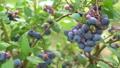 과일, 식물, 열매 33108689