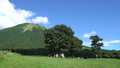 great mountain, pasture, cow 33108693