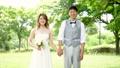 wedding, garden, bridal 33125165