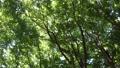 森に鳴くヒグラシ(秋のイメージ) 33186673