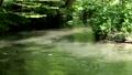 奥入瀬渓流の阿修羅の流れ 33200549