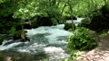 奥入瀬渓流の阿修羅の流れ 33200557
