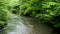 奥入瀬渓流の雲井の滝 33200558