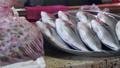 food,fresh,seafood 33207992