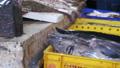 ปลา,อาหาร,ตลาด 33224816