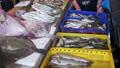 ปลา,อาหาร,เคาน์เตอร์ 33224825