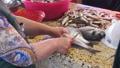 fish,market,food 33257049