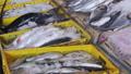 ตลาด,ตลาดปลา,ปลา 33257051