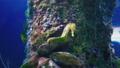 观赏鱼类 鱼 礁 33291262