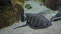 观赏鱼类 鱼 礁 33291268