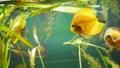 观赏鱼类 鱼 礁 33291272