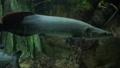 观赏鱼类 鱼 礁 33291274