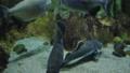 观赏鱼类 鱼 礁 33291277