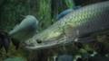 观赏鱼类 鱼 礁 33291296