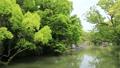 5月 緑の柳川川下り 33307593
