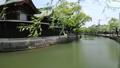 5月 緑の柳川川下り 33307594