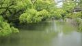 5月 緑の柳川川下り 33321521