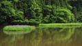 5月 湖北の平池(ひらいけ) -カキツバタの群生地- 33321524