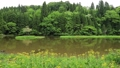 5月 湖北の平池(ひらいけ) -カキツバタの群生地- 33321527