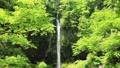 5月 緑の阿弥陀ヶ滝 33321528
