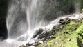 5月 緑の阿弥陀ヶ滝 33321529