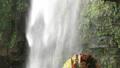 5月 緑の阿弥陀ヶ滝 33321530