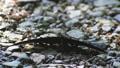 벌레, 나비, 호랑 나비 33352416